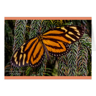 Schmetterlings-Inspiration Grußkarte