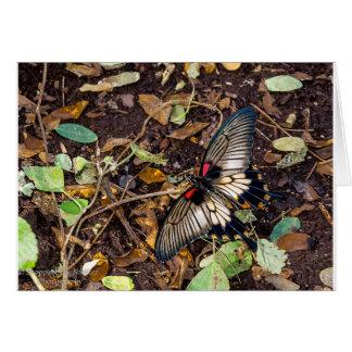 Schmetterlings-leere Anmerkungs-Karte Grußkarte