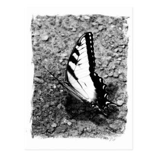 Schmetterlings-Schönheit - B&W Postkarte