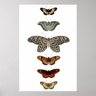 Schmetterlings-Zusammenstellung Poster