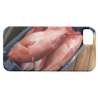 Schnapper-Fische iPhone 5 iPhone 5 Schutzhülle