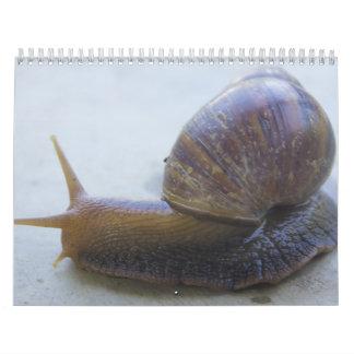 Schnecken Kalender