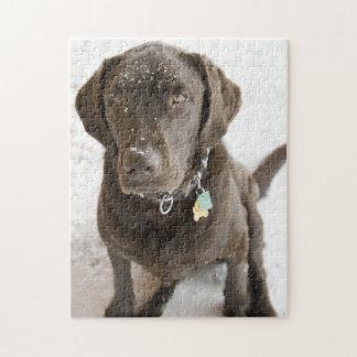 Schnee besprühte Schokoladen-Labrador-Fotografie
