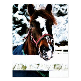 Schnee-Schönheit Postkarte