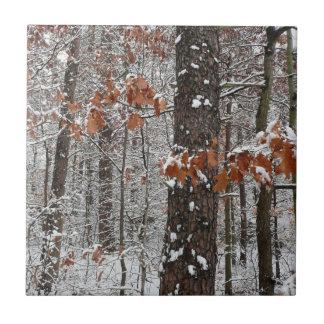 Schnee umfaßte Eichen-Winter-Natur-Fotografie Kleine Quadratische Fliese