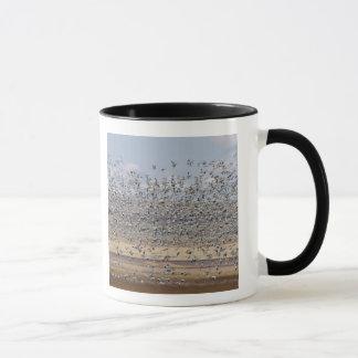 Schneegänse während Frühlingsmigration 3 Tasse