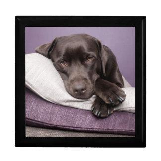 Schokoladen-labrador retriever-Hund schläfrig auf Erinnerungskiste