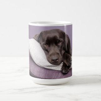 Schokoladen-labrador retriever-Hund schläfrig auf Kaffeetasse