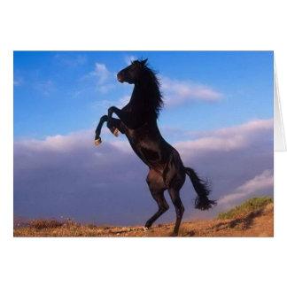 Schöne aufrichtende schwarze PferdeFoto-Geburtstag Grußkarte
