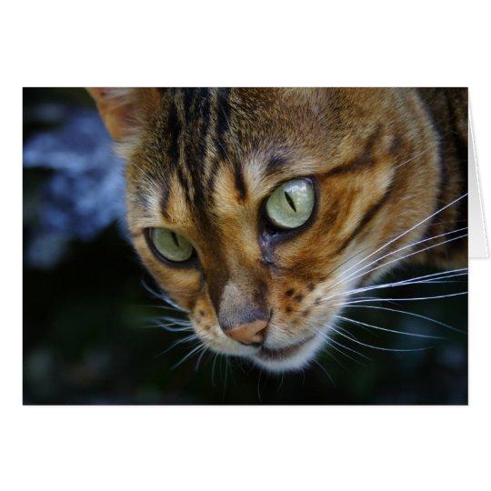 Schöne bengalische Katze Karte