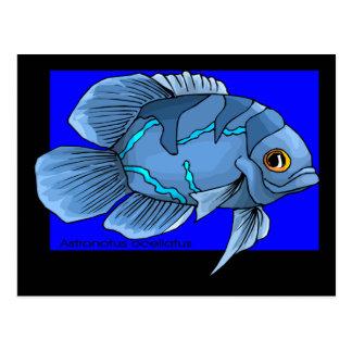 Schöne blaue tropische Oscar-Fische Postkarte
