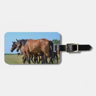 Schöne Bucht-Pferde Kofferanhänger