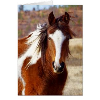 Schöne Farben-PferdeGeburtstagskarten Mitteilungskarte