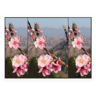 Schöne Fruchtplantage Blumen-Indiens UttraKHAND Postkarte