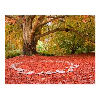 Schöne Herbst-Fall-Natur-feenhafter Ring Postkarte
