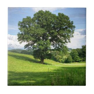 Schöne Landschaft des grünen Sommers der Eiche Kleine Quadratische Fliese