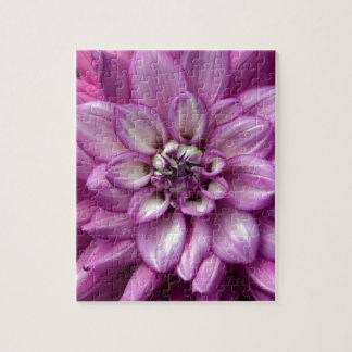 Schöne lila Dahlie-Blume