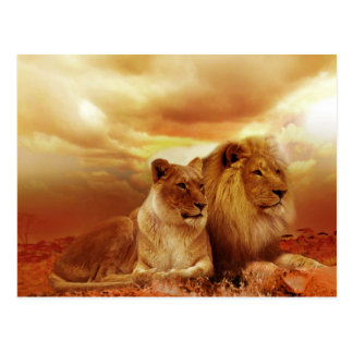 Schöne Löwe-Paar-Postkarte Postkarte