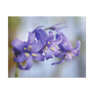 Schöne Nahaufnahme-Foto Bluebell-Blume Leinwanddruck