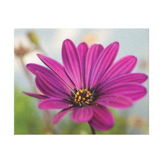 Schöne Nahaufnahme-Foto-Rosa-Blume gegen Himmel Leinwanddruck
