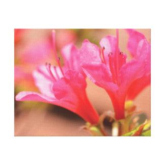 Schöne Nahaufnahme-Foto-Rosa-Blumen Leinwanddruck