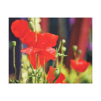 Schöne Nahaufnahme-Foto-Rotmohnblumen Leinwanddruck