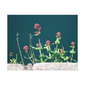 Schöne Nahaufnahme-Fotorosa-Blumen u. -wasser Leinwanddruck
