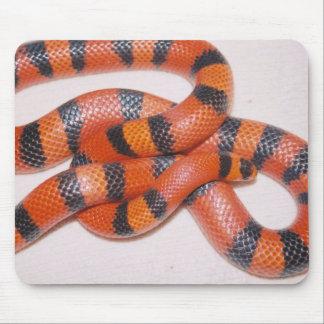 Schöne orange honduranische Milch-Schlange Mousepads