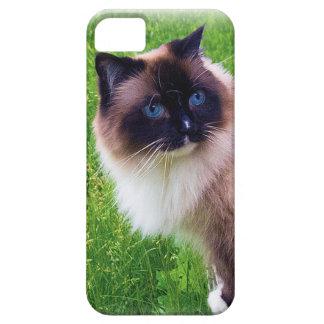Schöne Ragdoll Katze Etui Fürs iPhone 5