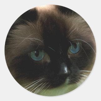 Schöne Ragdoll Katze Runder Aufkleber