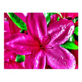 Schöne rosa Blumenazaleen-Postkarten Postkarte