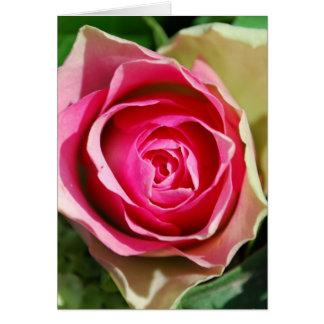 Schöne rosa Rose Karte