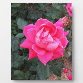 Schöne Rose Fotoplatte