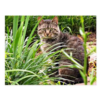 Schöne Tabby-Katze in der Postkarte