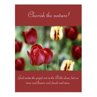 Schöne Tulpe und Waterdrops Postkarte