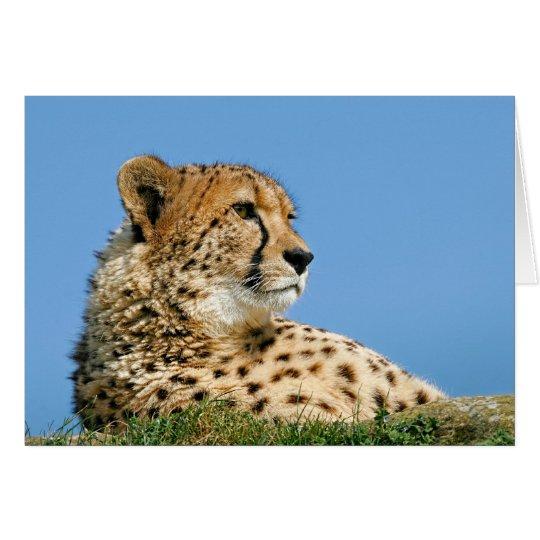 Schöner Gepard - Gruß-Karte Karte