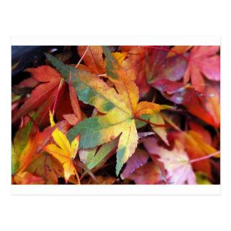 Schöner Herbst-Blätterdruck Postkarte