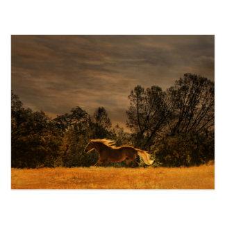 Schöner laufender Palomino im Sonnenuntergang Postkarte