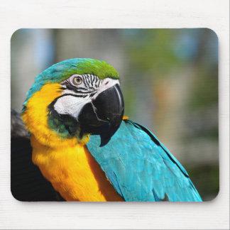 Schöner Macaw-Papagei Mousepad