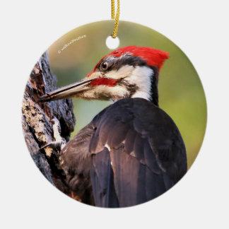 Schöner Pileated Specht auf dem Baum Rundes Keramik Ornament