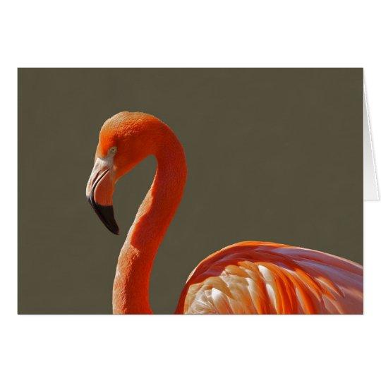 Schöner rosaroter Flamingovogel Grußkarte