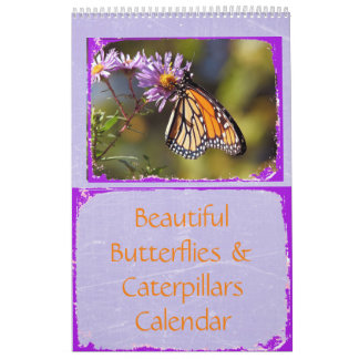 Schöner Schmetterlings-und Raupen-Kalender Wandkalender