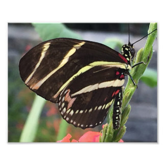 Schöner schwarzer Schmetterling mit gelben Kunst Foto