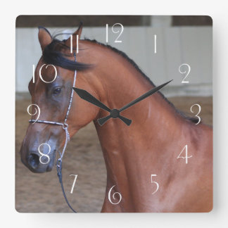 Schöner Thoroughbredaraber Stallion Quadratische Wanduhr