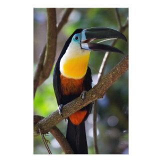 Schöner toucan Vogel in einer Baumnaturlandschaft Briefpapier