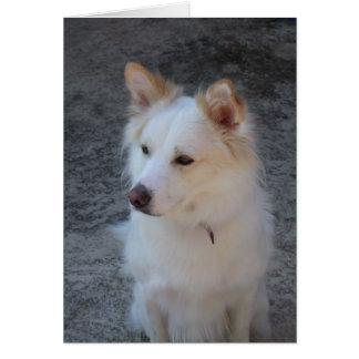 Schöner weißer Hund 01 Karte