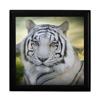 Schöner weißer Tiger (v2) Erinnerungskiste