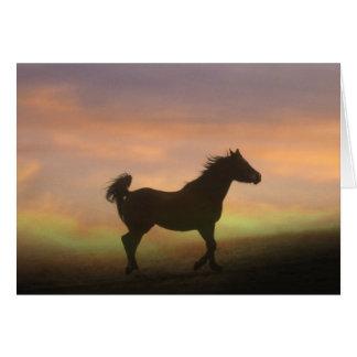 Schönes arabisches Pferd in der Karte