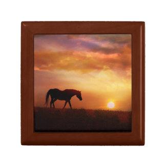 Schönes arabisches Pferd und Erinnerungskiste