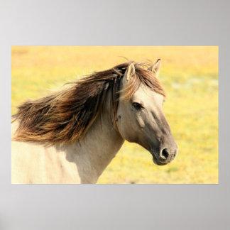 Schönes graues wildes Pferd Posterdruck